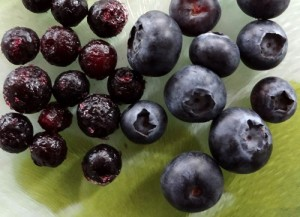 frozen wild blueberries and fresh cultivated blueberries